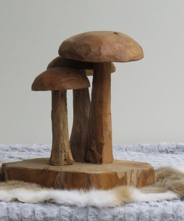 Paddenstoelen/ Mushroom