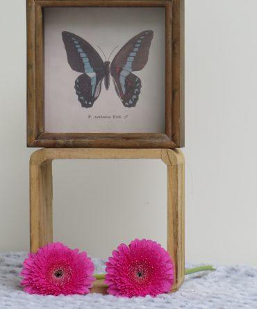 Vlinder in een fotolijst