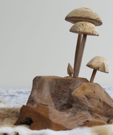 Paddenstoelen (3) Mushrooms