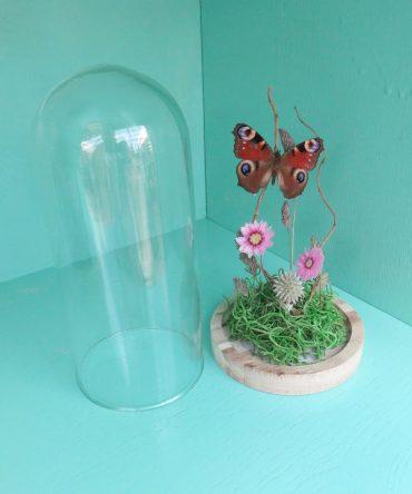 Vlinder in een glazen stolp